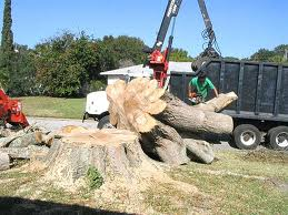 Tree removal in Rosemount MN