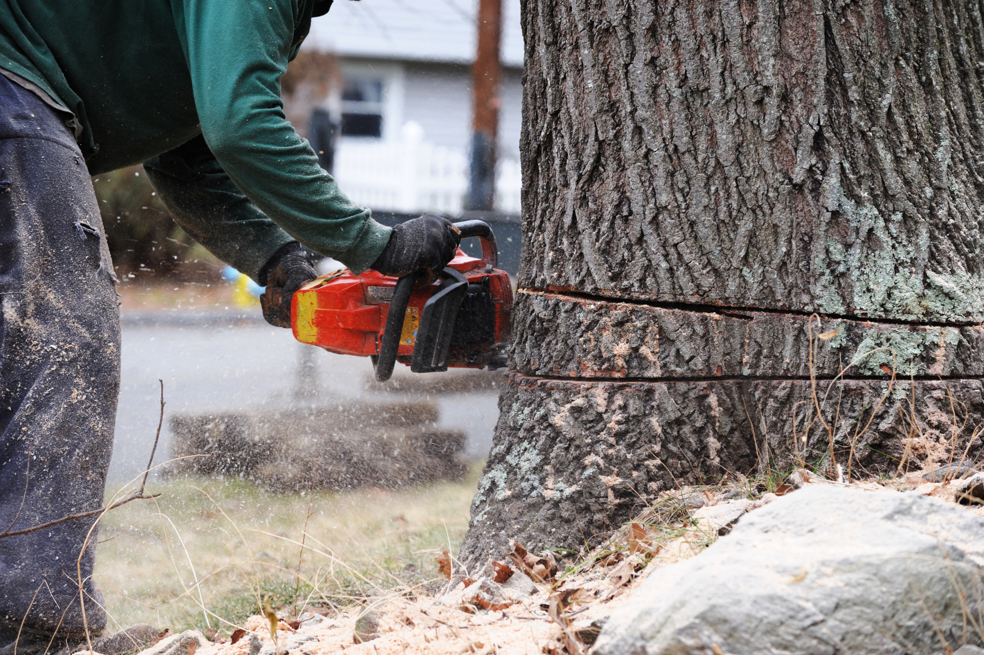 Tree Removal Process: Everything You Need to Know