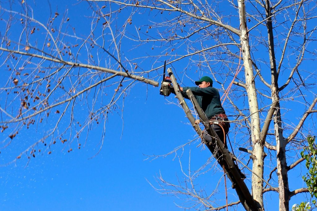 tree trimming rosemount mn