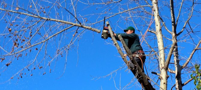 The Benefits of Tree Trimming for Happier, Healthier Trees