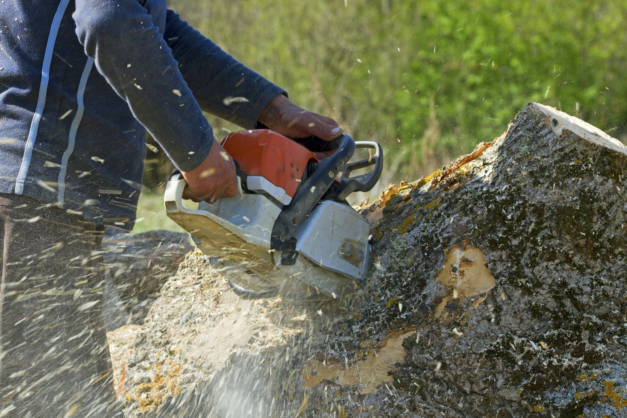 What to Expect From Hiring a Commercial Tree Removal Service
