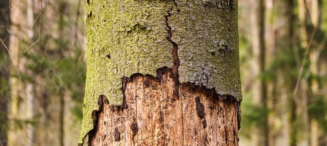 Tree Disease Identification: Is Your Tree Diseased?