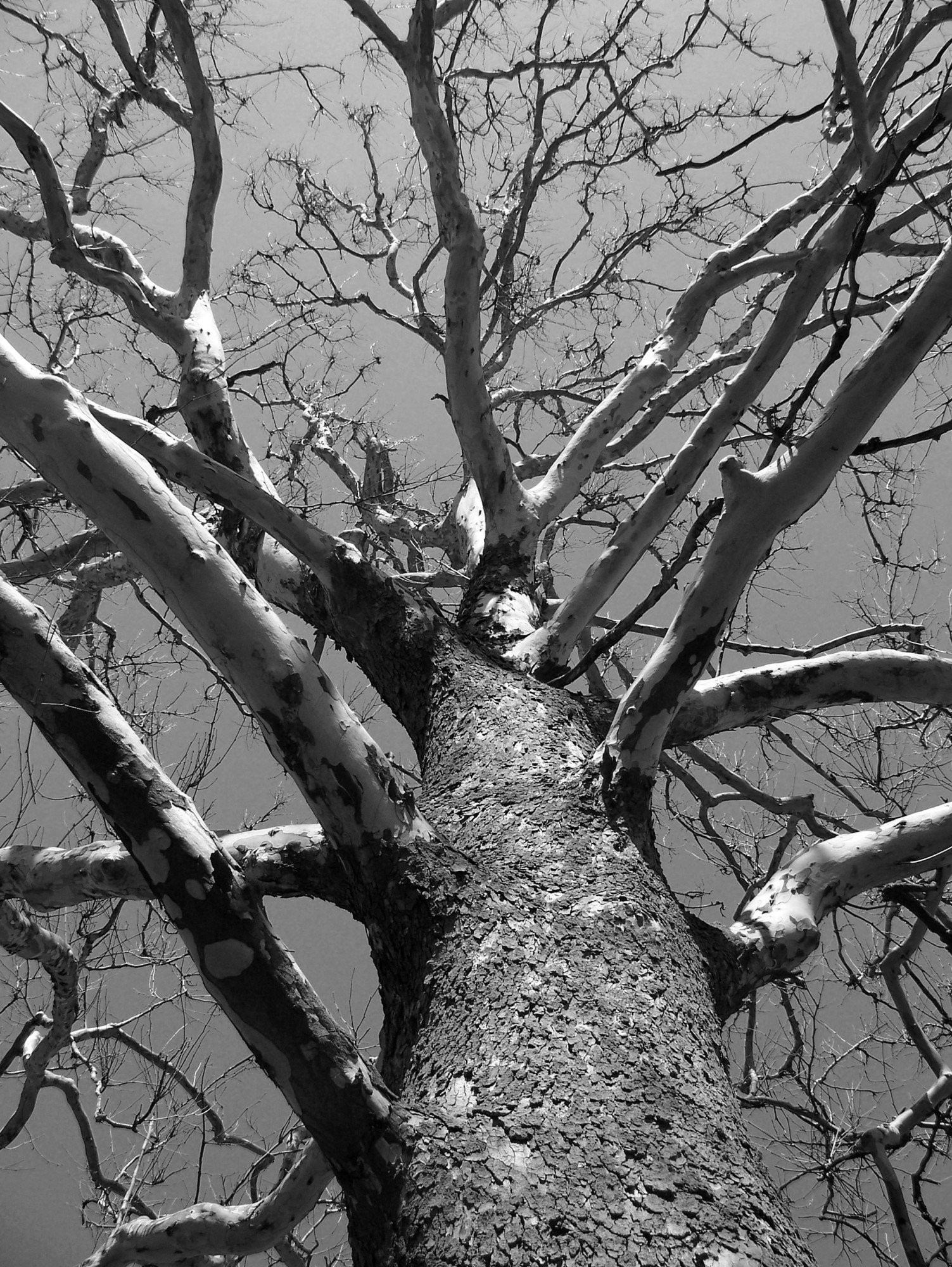 Dead Tree Removal: Why It's Incredibly Important to Remove Dead Trees